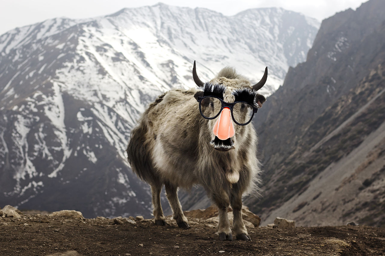I Spent a Week Yak Shaving Instead of Running a Pricing Test | Cory Zue